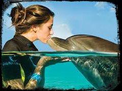 dolphine watch maurice